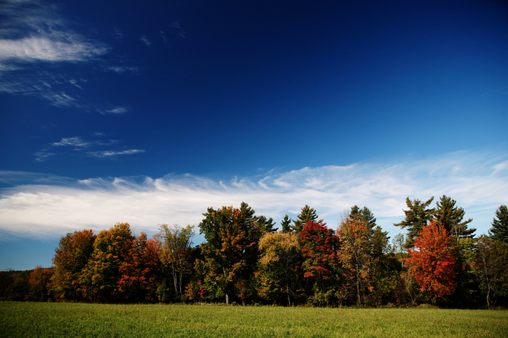 11_Life-of-pix--forest-autumn-meadow-by leroy