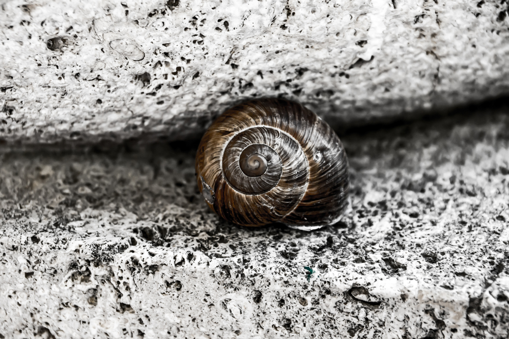 9.Snapographic-Snail